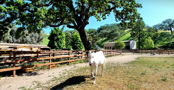 horse property for sale paso robles
