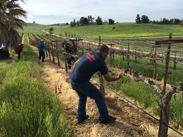 2016 Pruning Competition