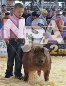 Swine association