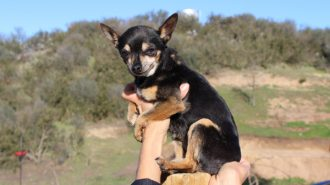 Tinker pet of the week