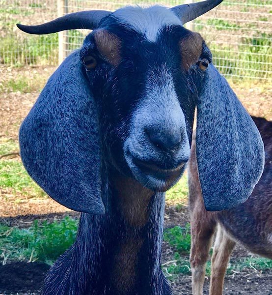 Friendly farm animals to greet you as you walk the property (Photo provided by Donna Polizzi)
