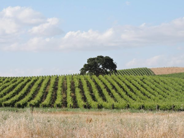 things to love about paso robles