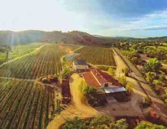 Cass Vineyard & Winery wins Winery of the Year