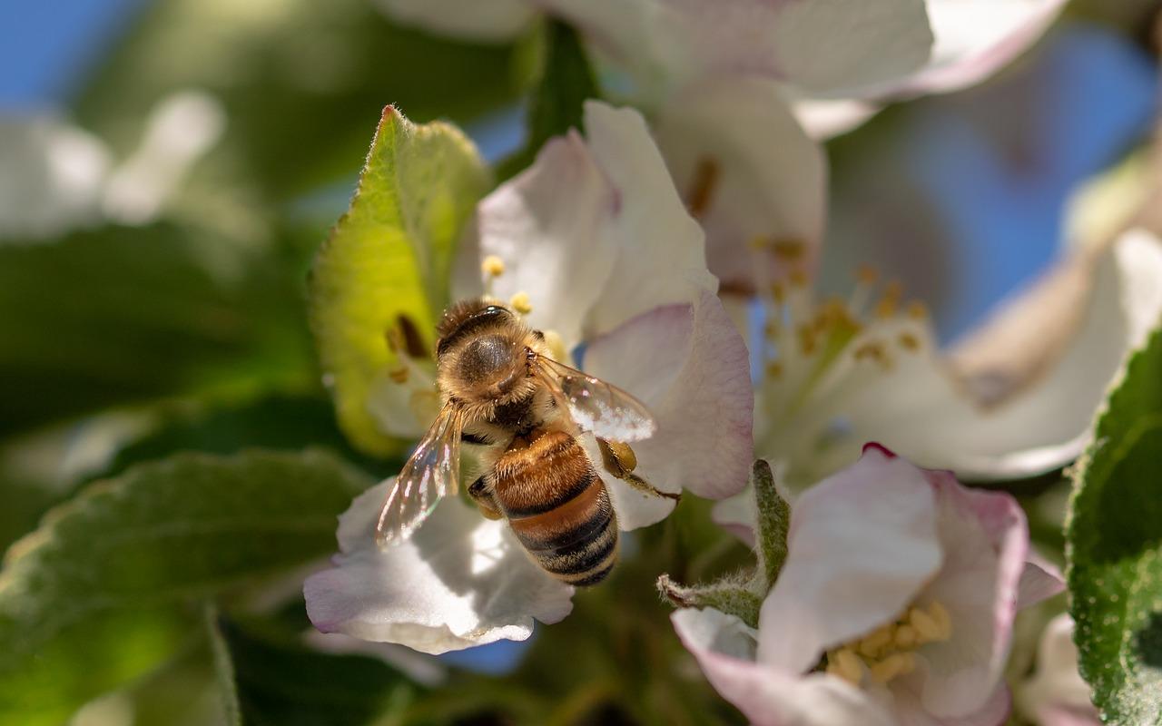 Apples and Honey Festival returns to San Luis Obispo Sunday