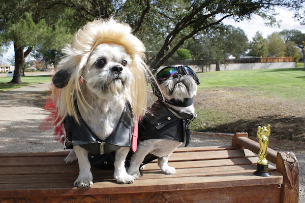 Howl'oween-at-sherwood-dog-park