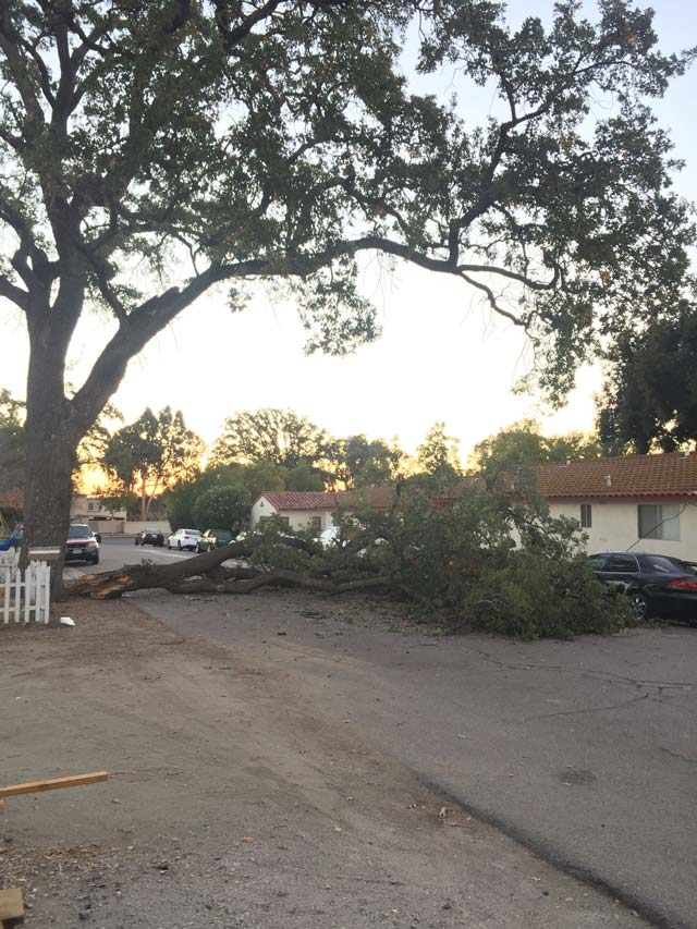 tree down in paso robles