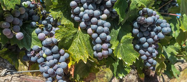best pinot noir in paso robles