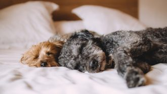 pet-friendly hotels in paso robles