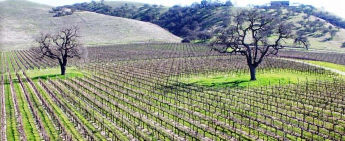 Backroads wineries paso robles