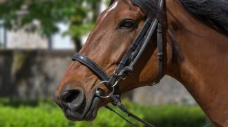 best horseback riding in Paso Robles