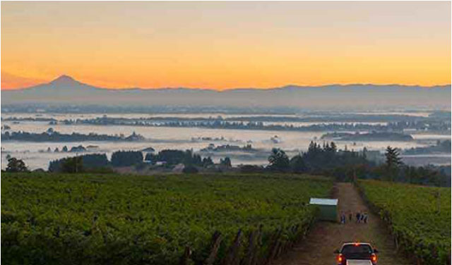 Delicious wines from up north – Willamette Valley