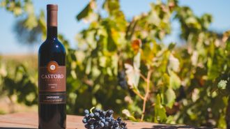 Castoro cellars wine paso robles
