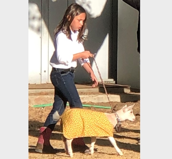 Hundreds participate in Mid-State Dairy Goat Show