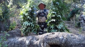 marijuana grow operation arroyo grande