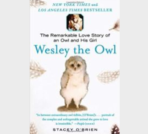 Wesley the Owl by Stacey O'Brien October's 'Good Read' at the library