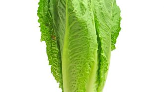 Warning not to eat Romain lettuce