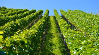 best single vineyard wines Paso Robles