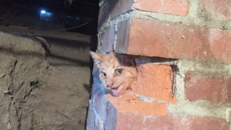 Cat rescued from abandoned chimney