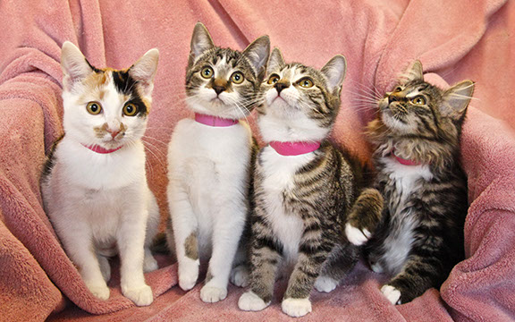 Photo of cats from HART