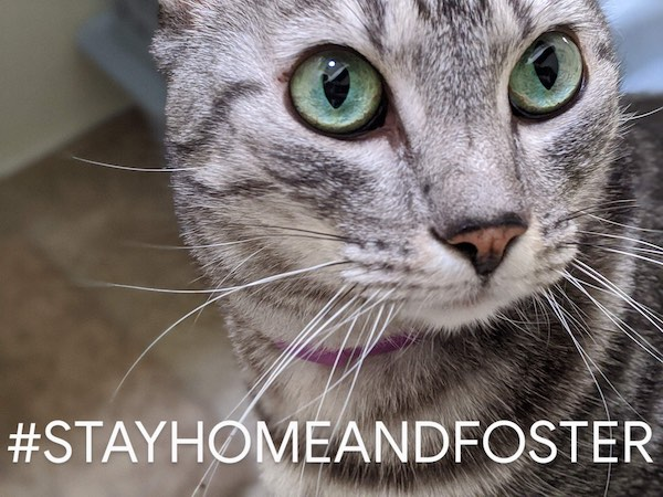 Foster a cat from HART shelter in Cambria