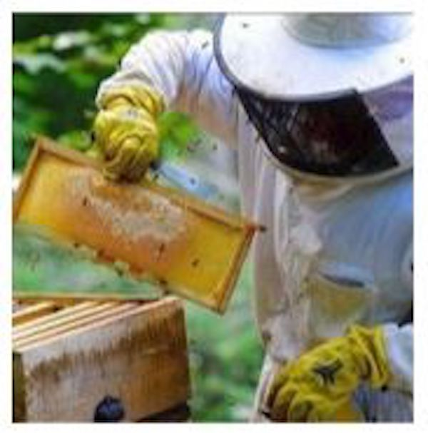 Library to present 'An Introduction to Beekeeping' April 9