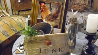 rooster in box