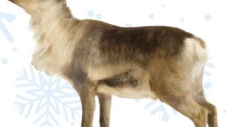 'Santa's Reindeer Pop-Up Farm' happening in Atascadero
