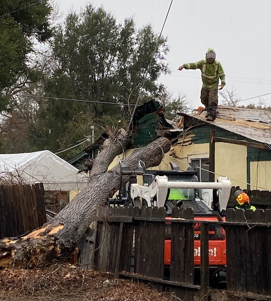 Tree hits neighbor's house at 5410 Capistrano