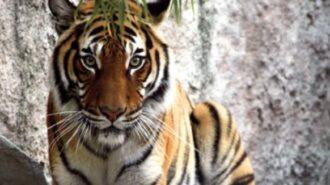 charles paddock zoo atascadero