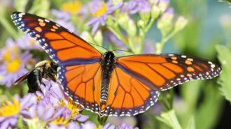 backyard gardens save the monarch butterfly
