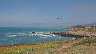 gulls flying cambria