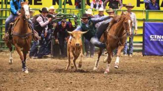 –Eleven members of Cal Poly's Rodeo Team qualified to compete in the 72nd annual College National Finals Rodeo held June 11-19 in Casper, Wyoming, where one student-athlete came away with a second-place win: Grant Peterson, a second-year agricultural systems management major, placed second in the steer wrestling event.
