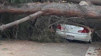 Large fallen tree blocks roadway, crushes vehicle