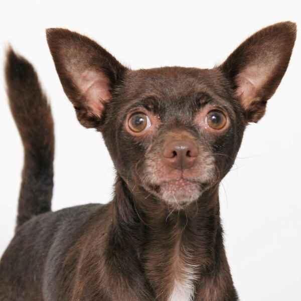 Adoptable pet of the week: Mojito